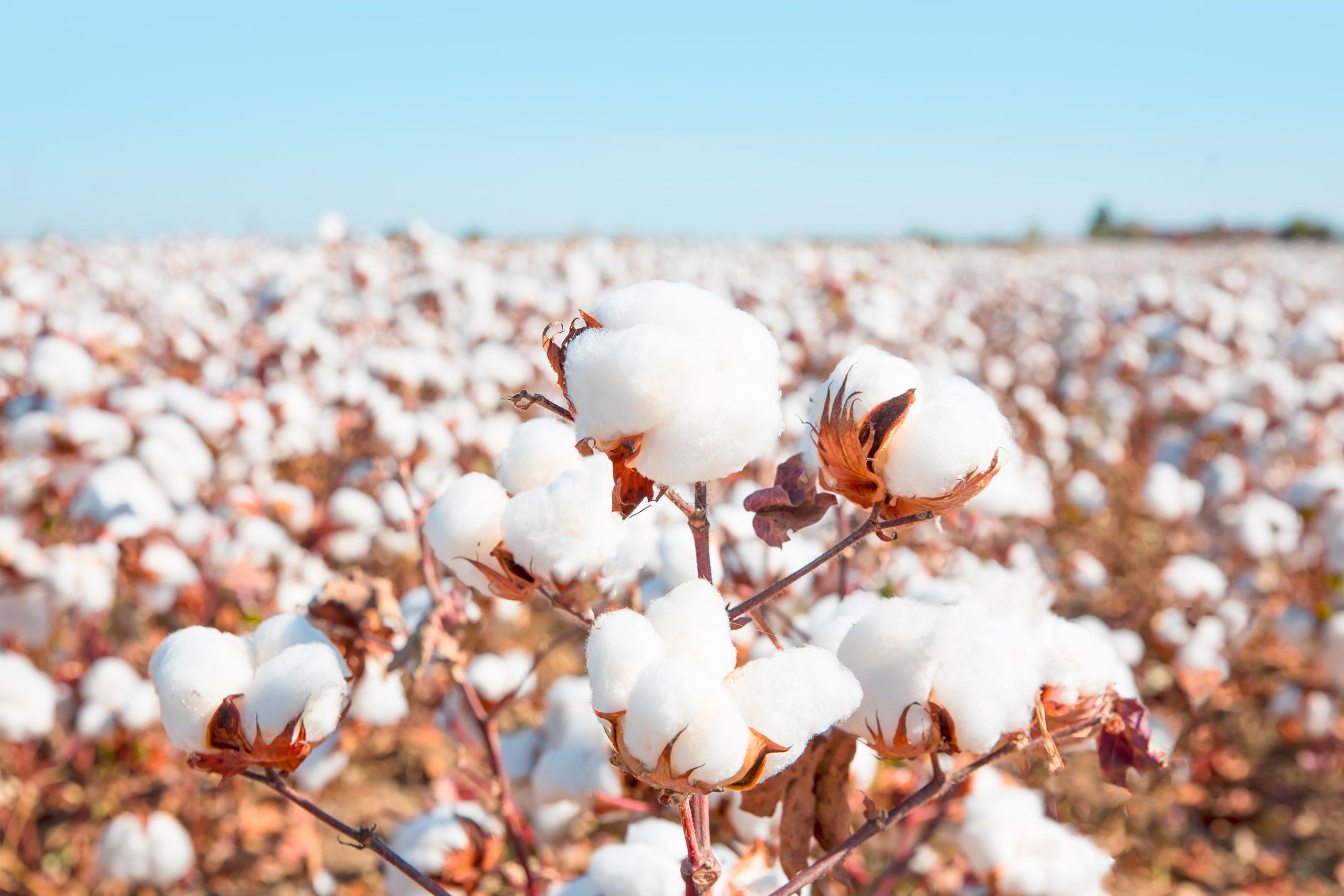 coton vs lingette lavable